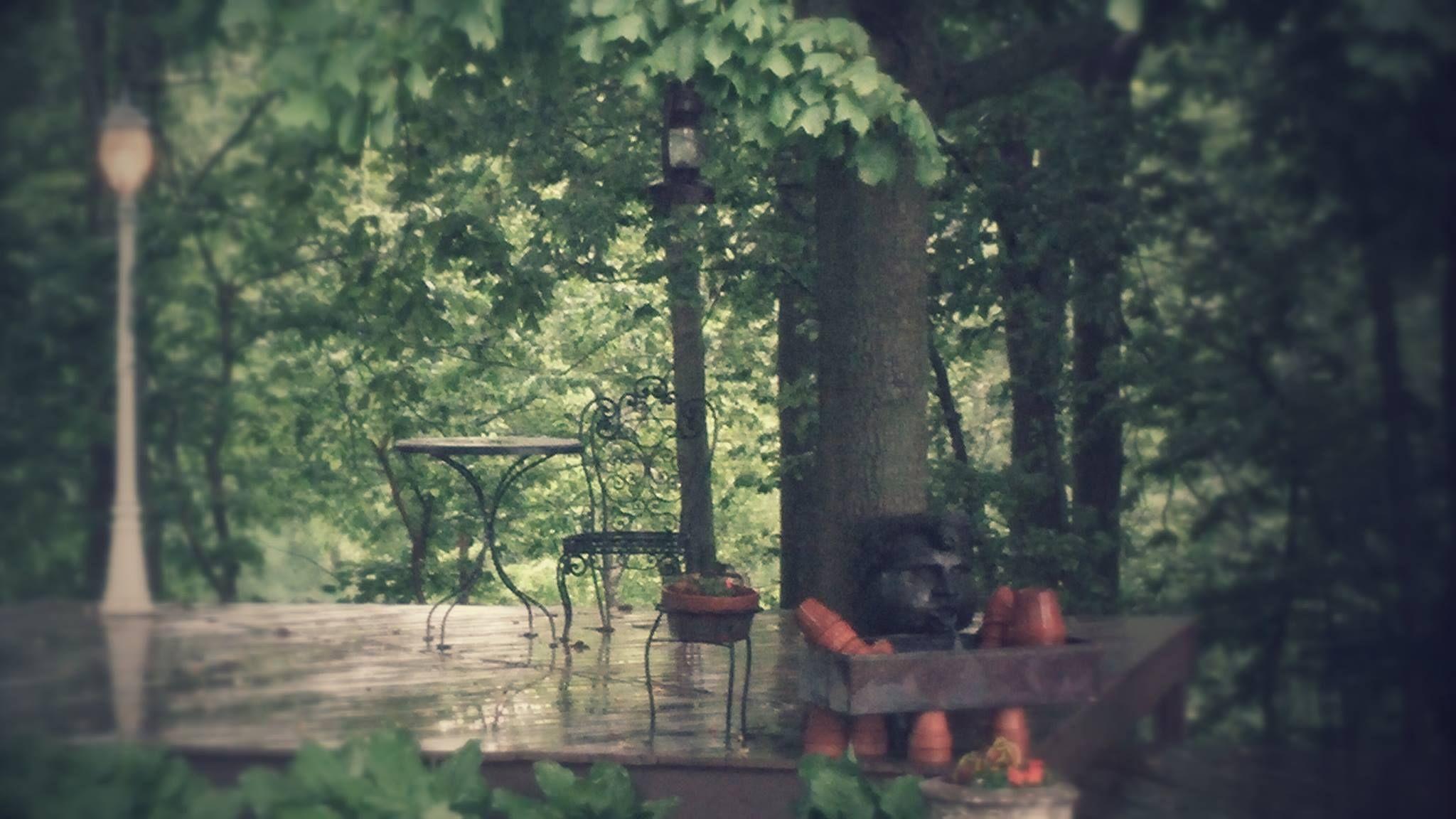 Rainy Sunday morning at Urban Barn.   #backyardatTheBarn   #birdsarehappy