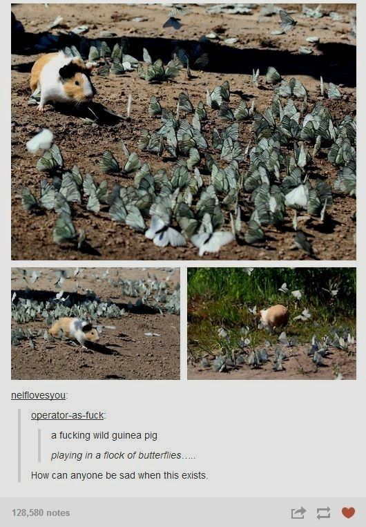 Photo of When Tumblr Is Being Cute And Funny With All These Guinea Pigs Posts