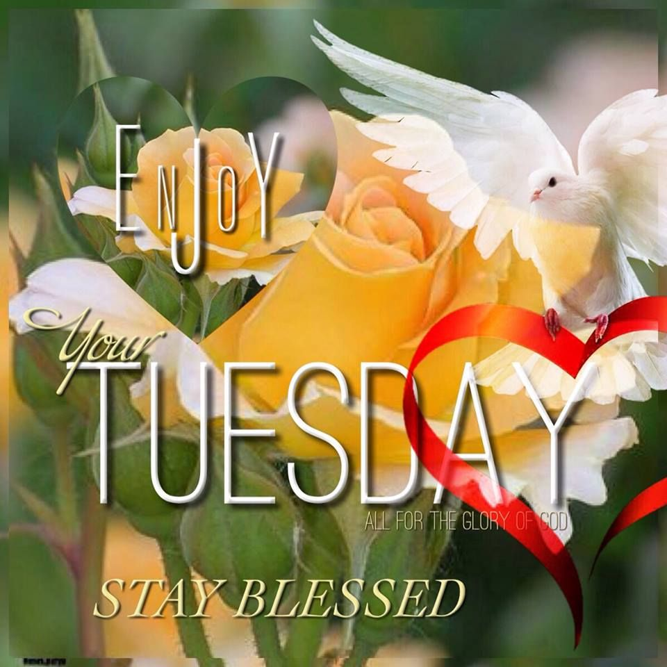 Enjoy your Tuesday. Stay Blessed. (With images) Morning
