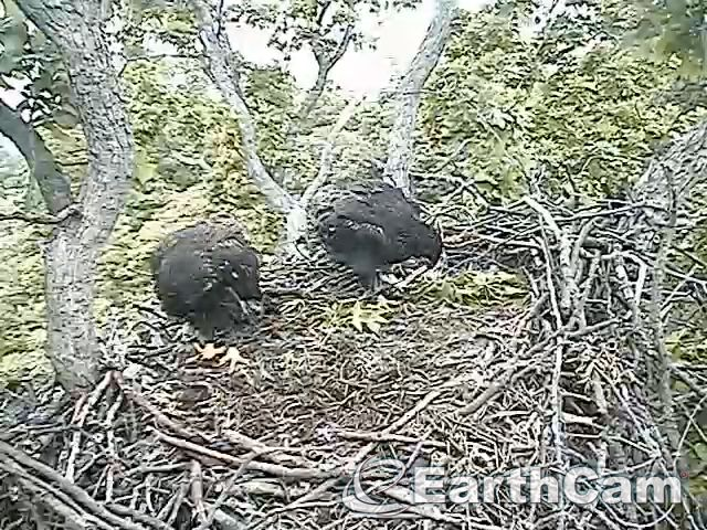 Check out Eagle Cam in Washington, DC, United States. http://www.earthcam.com/usa/dc/eagle/