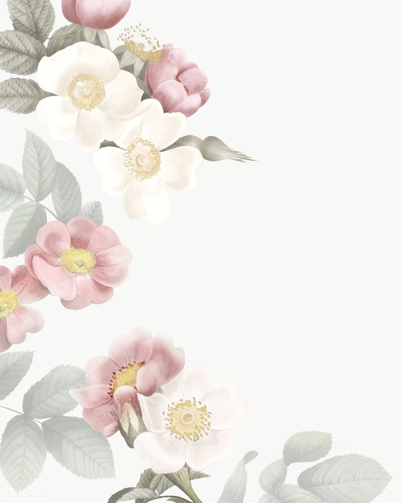 Download Premium Png Of Elegant Floral Frame Design Transparent