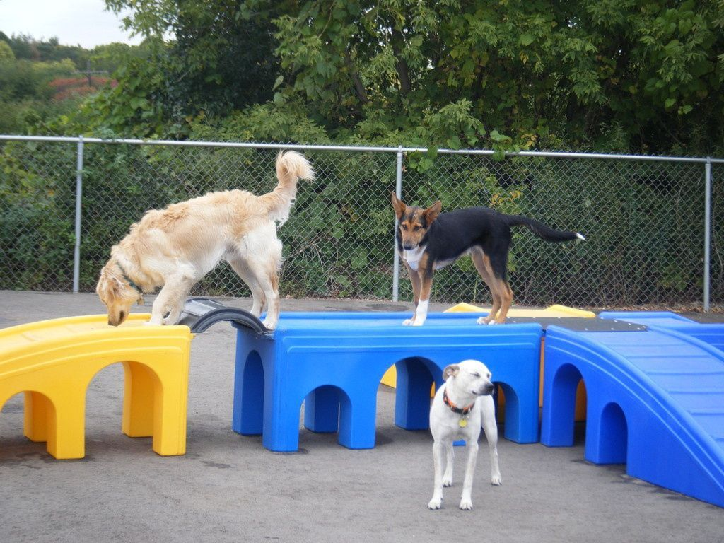 Puppy Playground manufactures Dog Play Equipment and games ...