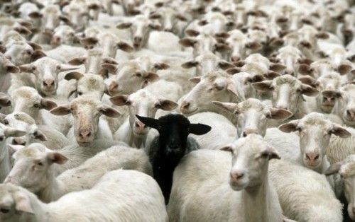 don´t be a sheeple...be yourself!
