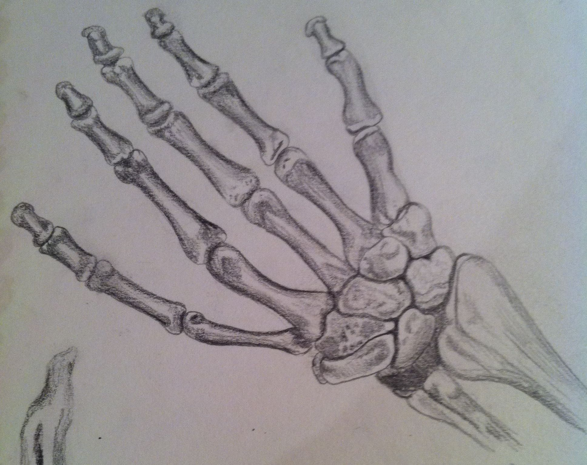 The skeleton hand