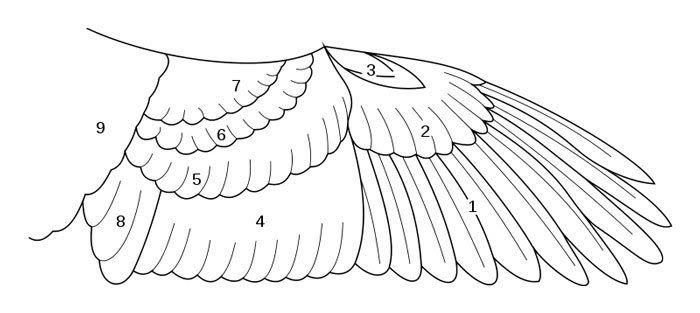 The Dragon Bird Green Peafowls Animal Reference Pinterest