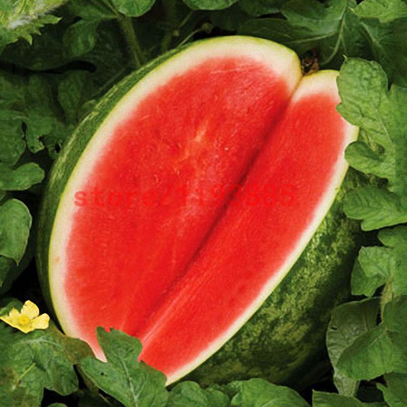 30 st cke melone samen kernlose wassermelone samen obst pflanzen vielzahl frische k hle sommer. Black Bedroom Furniture Sets. Home Design Ideas