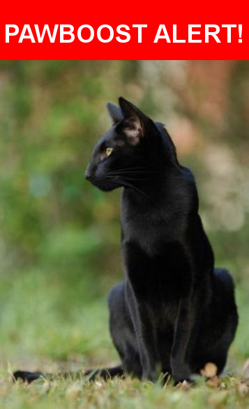 Pin On Black Cats