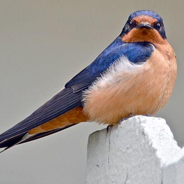 Garden | World birds, Birds