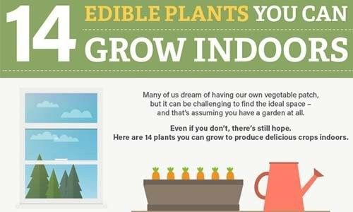 14 Edible Plants You Can Grow Indoors 9Interiores 400 x 300