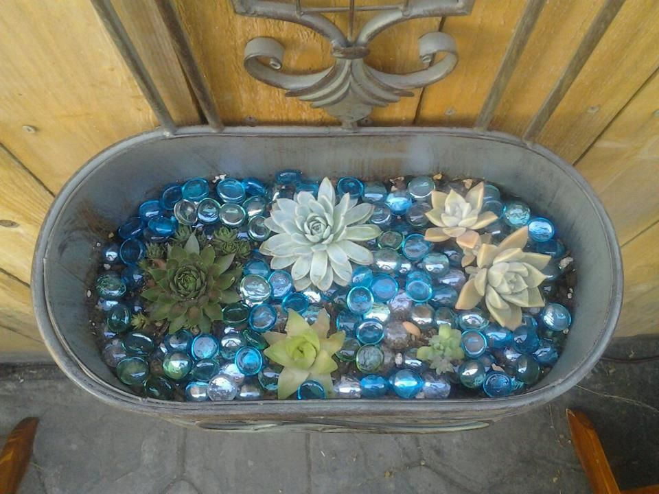Succulent Container Succulents In Containers Small Gardens Planting Succulents