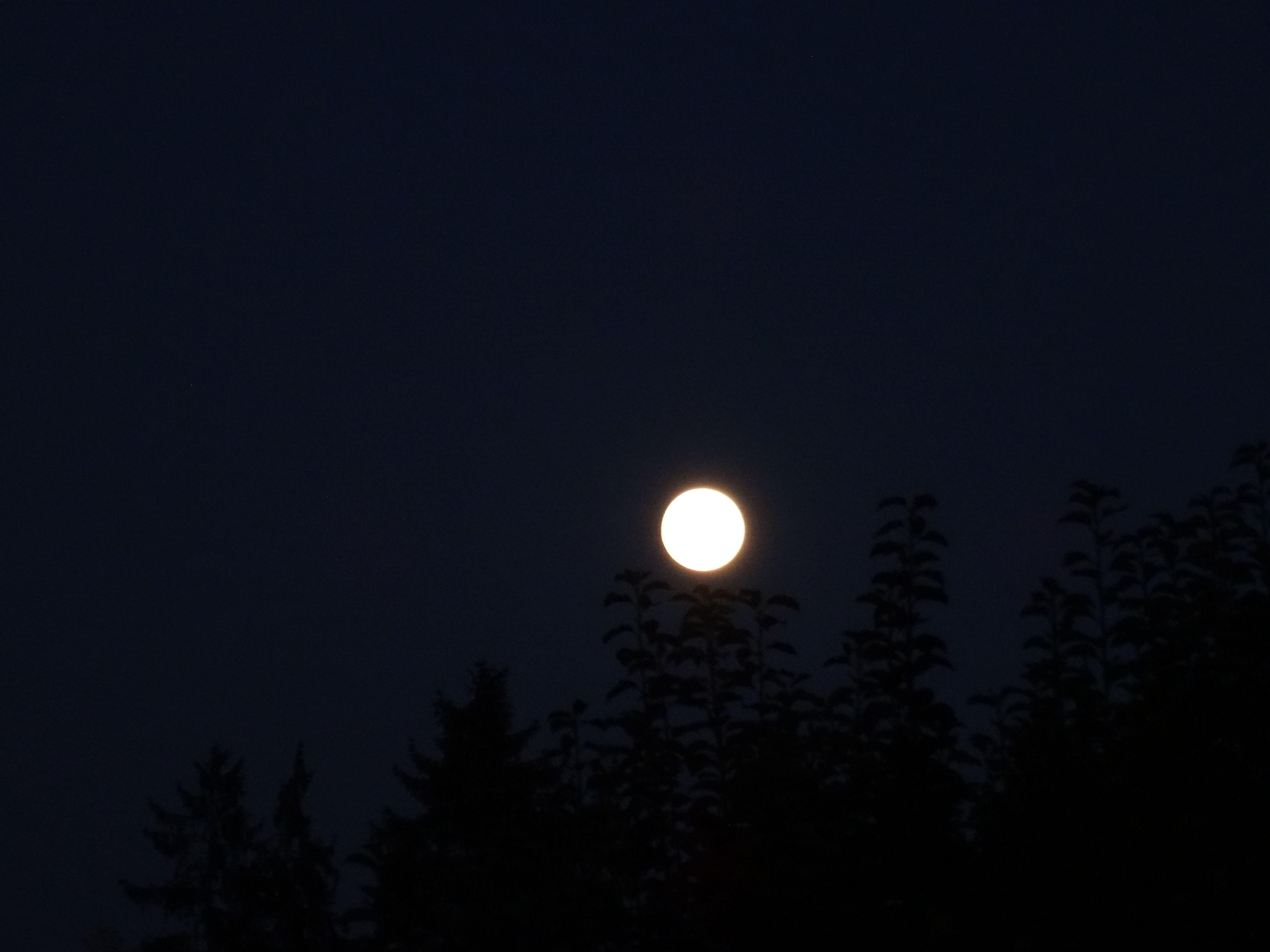 Der Mond scheint, wenn die Dunkelheit kommt. ♥