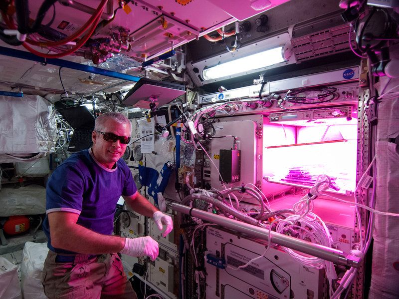 The Salad Frontier: Why Astronauts Need To Grow Lettuce In ...