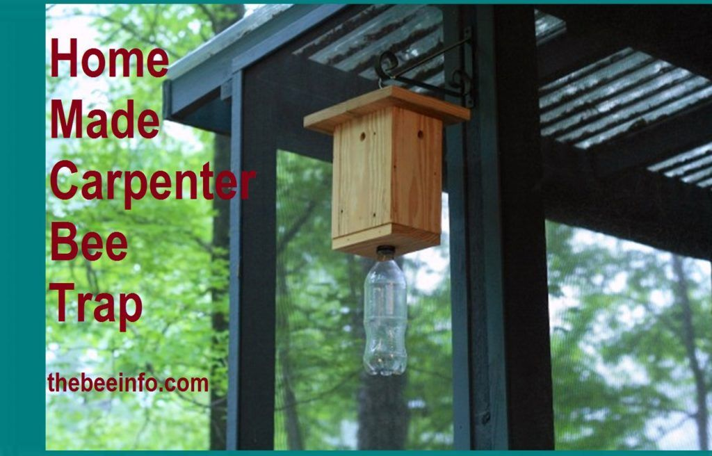 Carpenter bees trap how to prevent carpenter bees in 2020