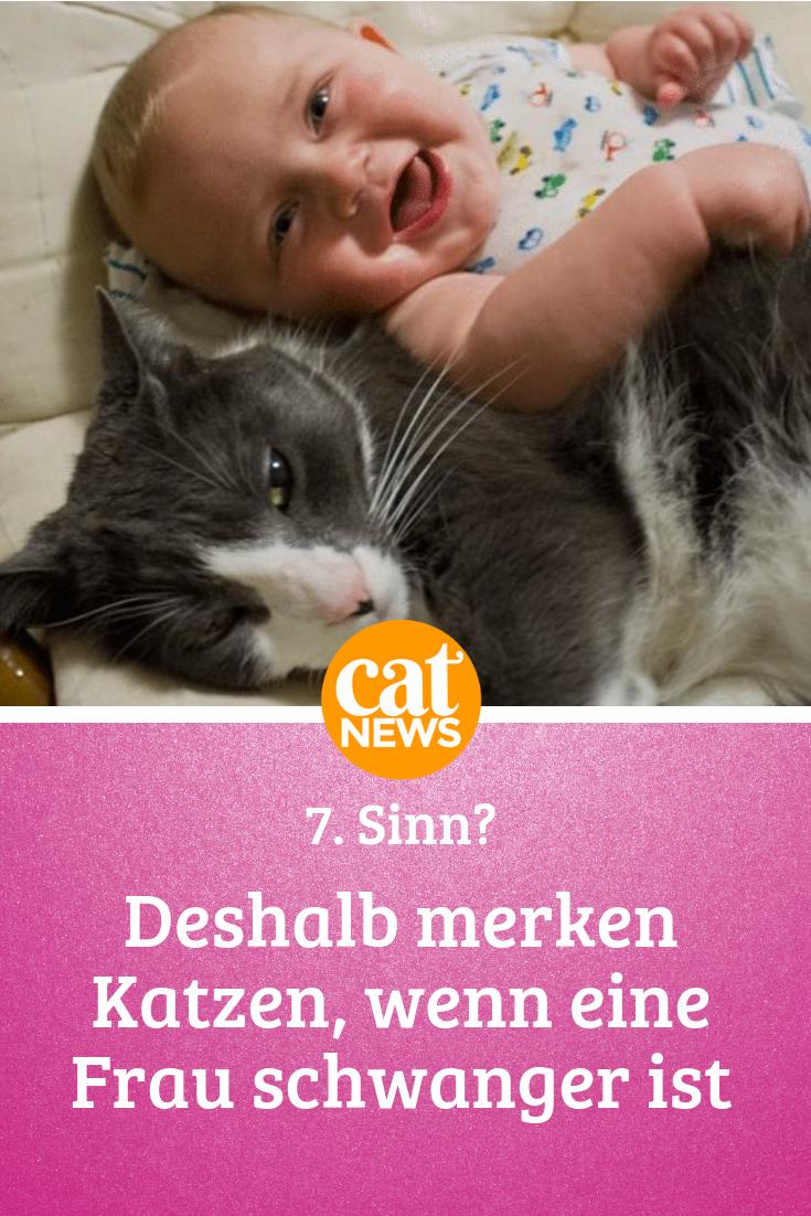 Schwangere Katze Verhalten