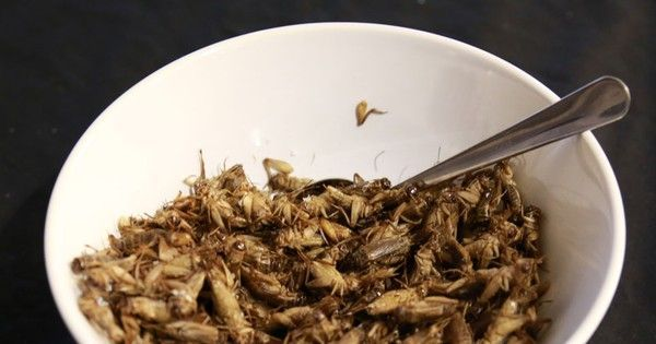 Third Millennium Farming digs into the details of eating insects.