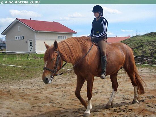 Estonian Native mare Venta