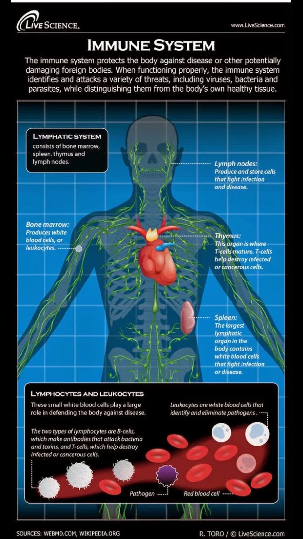 The Immune System Medicina Pinterest Immune System