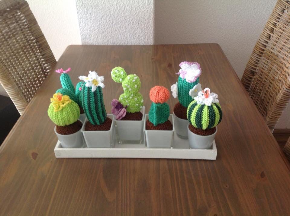 Cactus plantjes! Leuk!