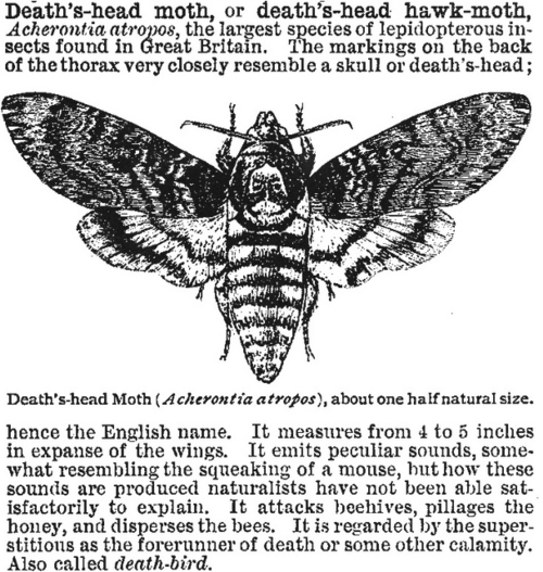 Grove Of Libitina In 2020 Moth Symbolism Death Head Moth Tattoo Death Moth Tattoo