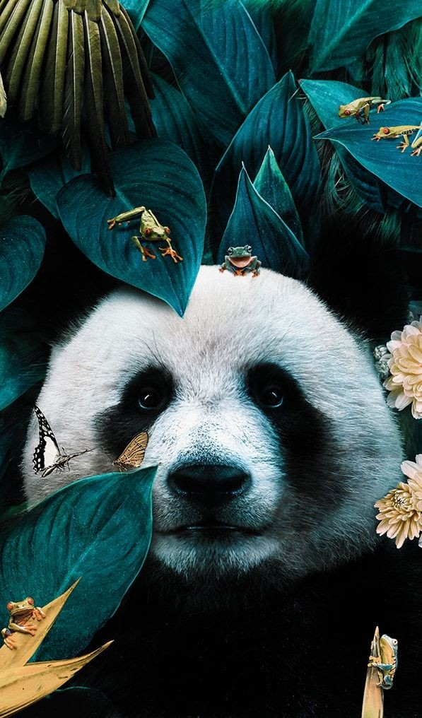 Lbert Rc On Twitter Wild Animals Photography Panda Art Animals Beautiful