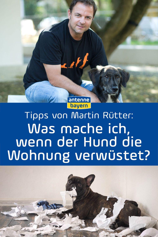 Hundeprofi Martin Rutter Beantwortet Eure Fragen Rund Um Die