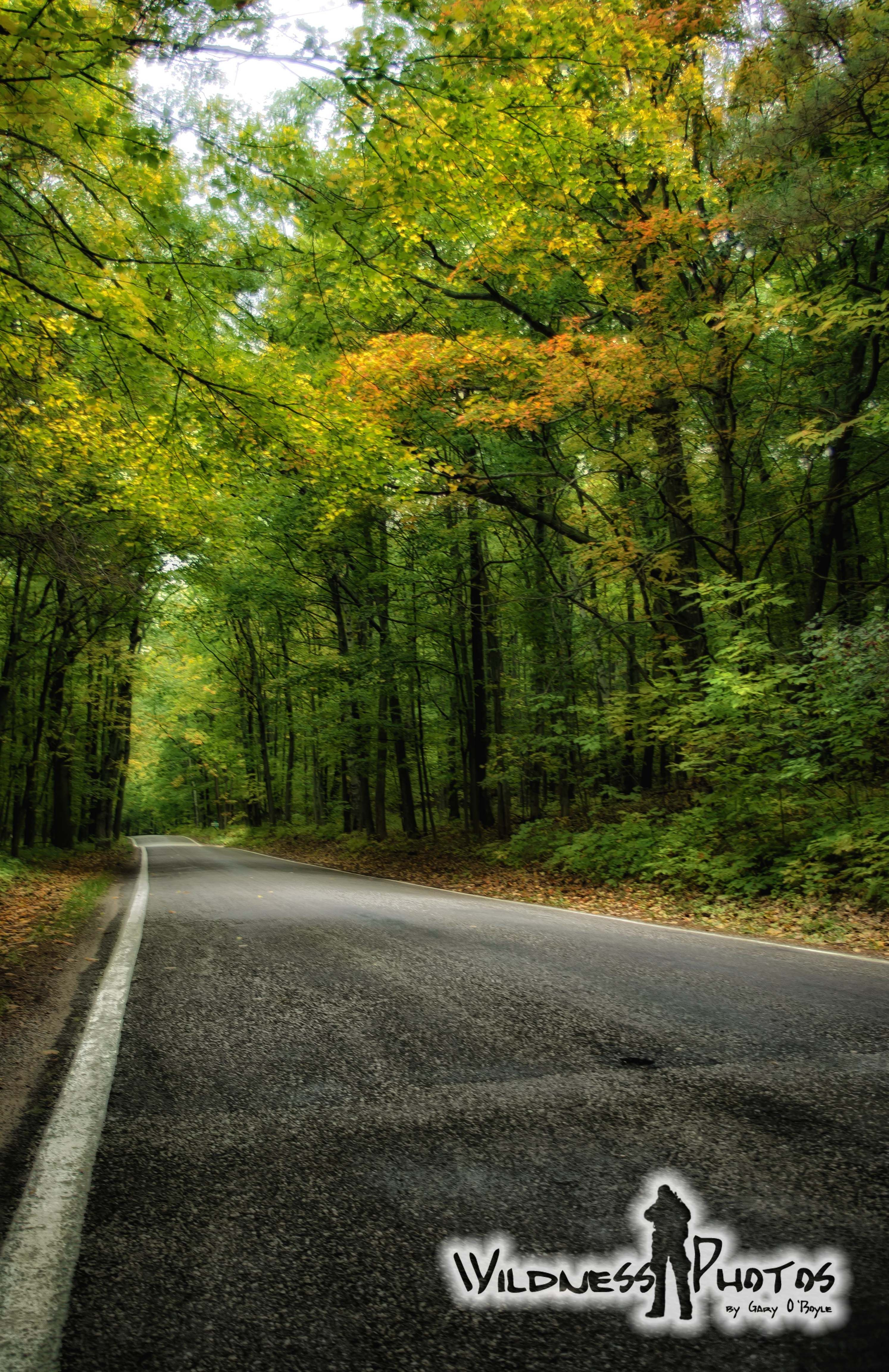 Michigan M119 - Tunnel of Trees 12 | On the Road Again | Pinterest
