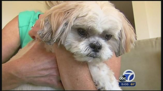 Dog Owner Says Injuries From Petco Grooming Session Led To 7 000 In Vet Bills For Shih Tzu Petco Dog Owners Shih Tzu