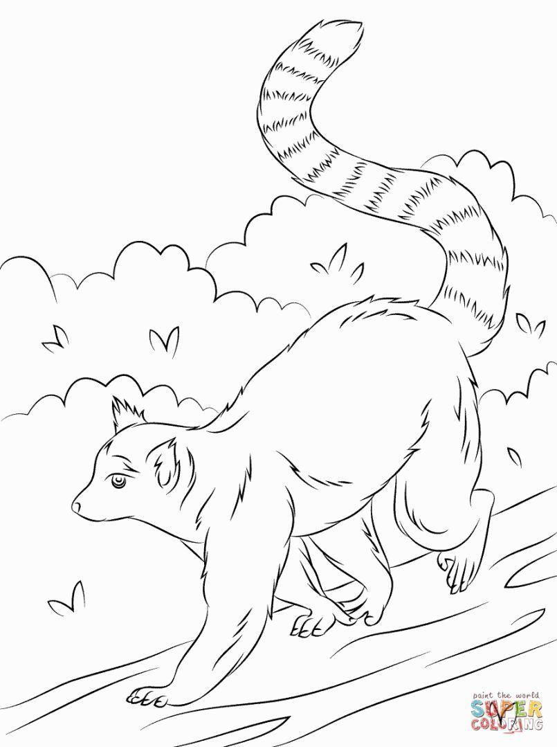 Lemur Coloring Pages | Coloring Pages | Pinterest | Lemur