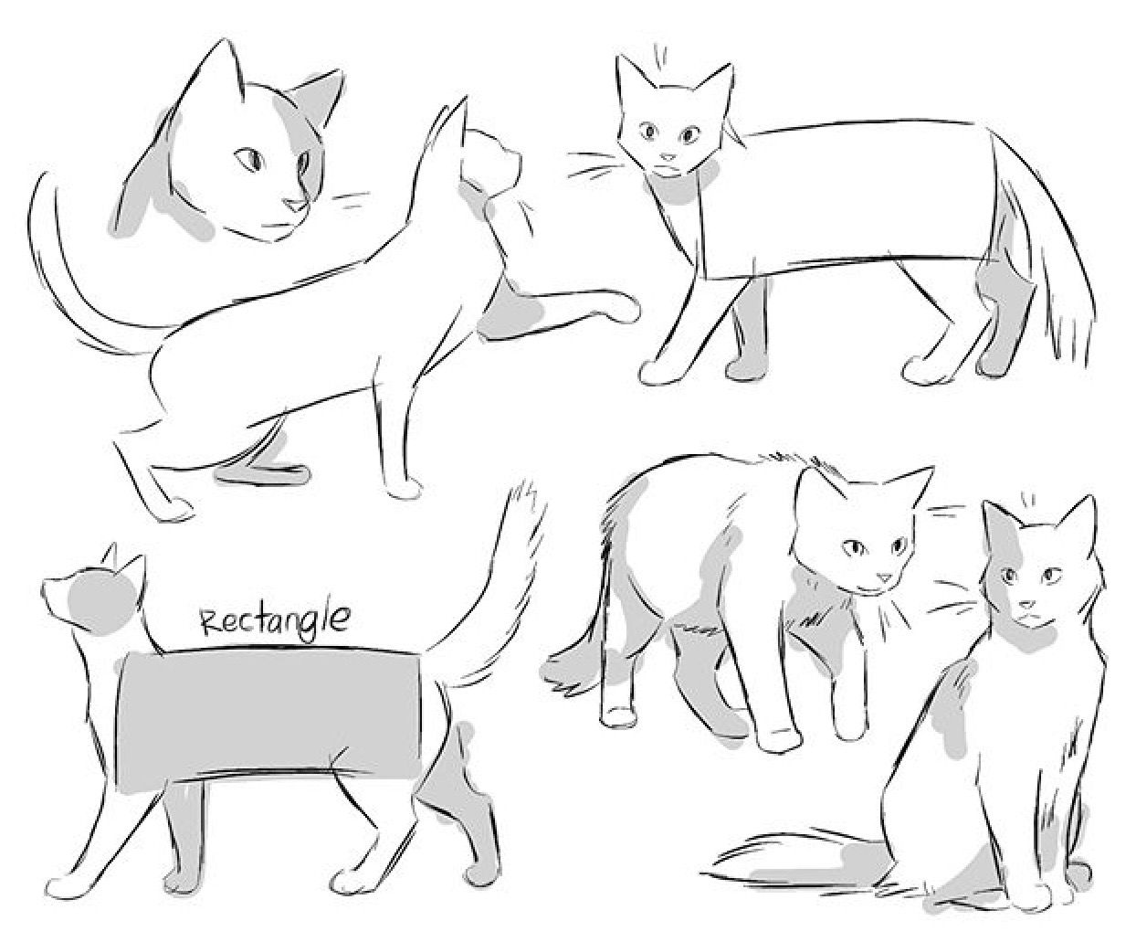 Litriu What Up Here S A Cat His Name Is Poppyleg Warrior Cat