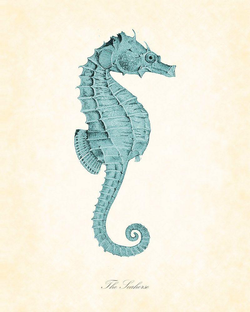 Drawing Detail. Vintage seahorse print. Illustration. Seahorse ...