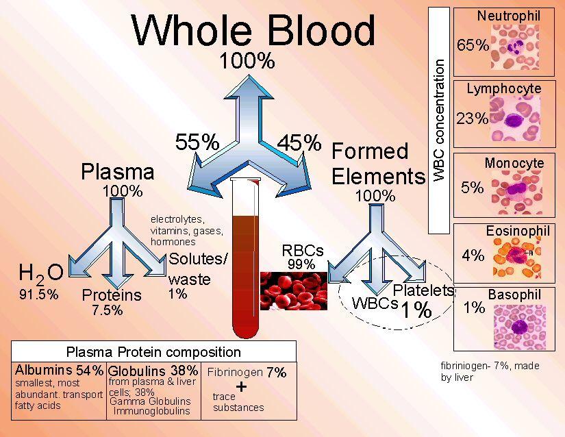 Whole Blood Future nurse