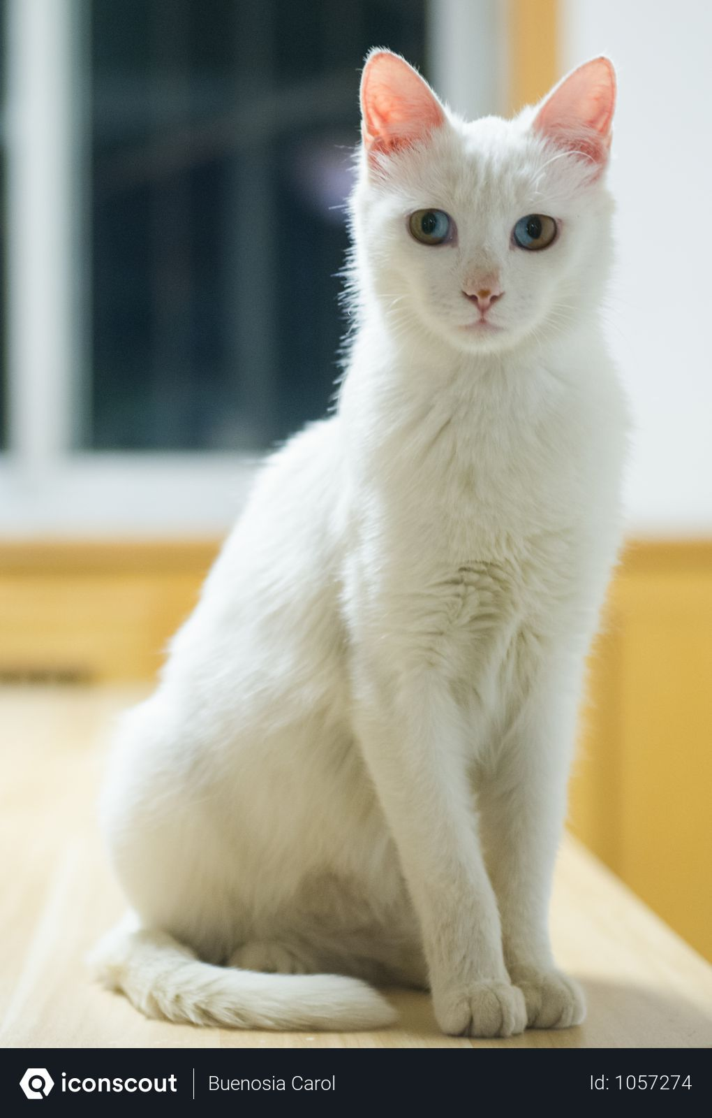 Free Mysterious White Cat Photo Download In Png Jpg Format Pretty Cats Cute Cats Photos Cat Photo