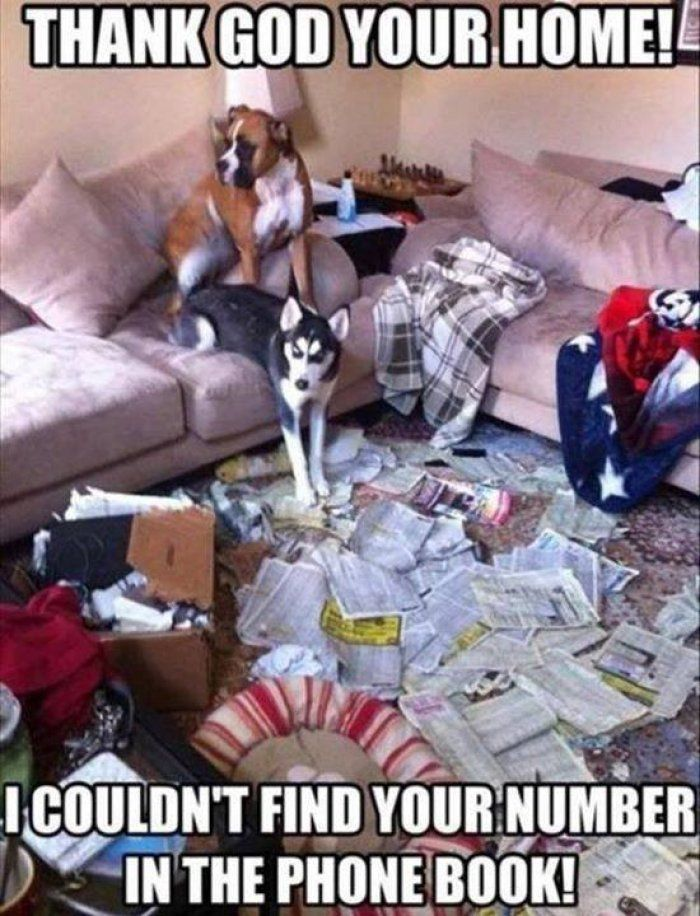 Thank God Your Home Dog Meme Funny Animals Dog Shaming Funny Animal Pictures