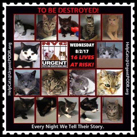 Pin On Adopt Rescue Foster Help Save A Life