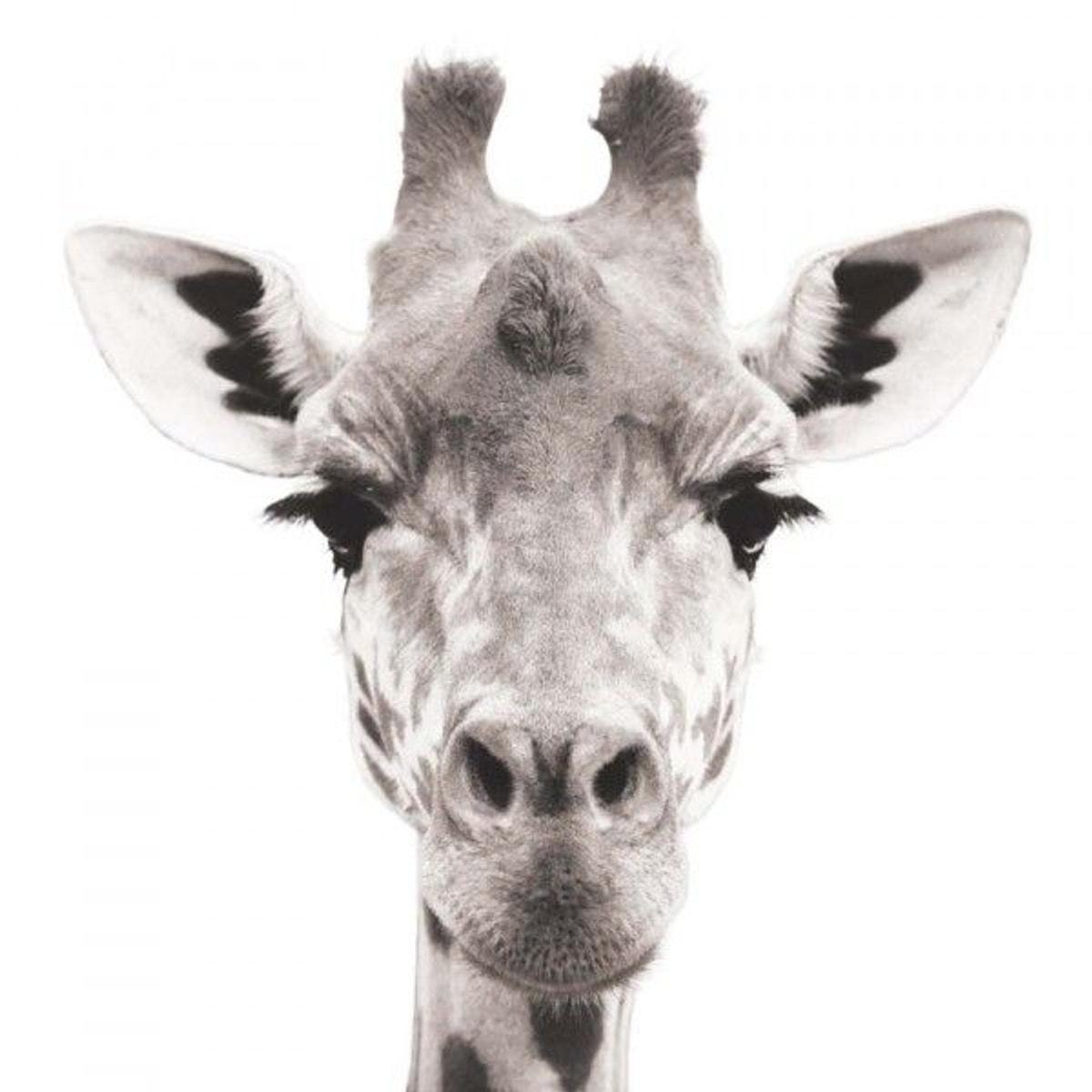 Sticker Photo Animal Tête Girafe Taille 077 x 085 cm