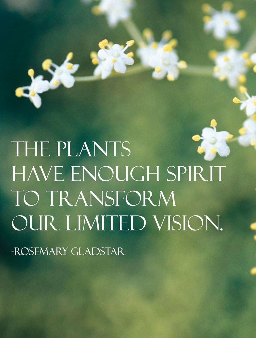 """""""The plants have enough spirit to transform our limited"""
