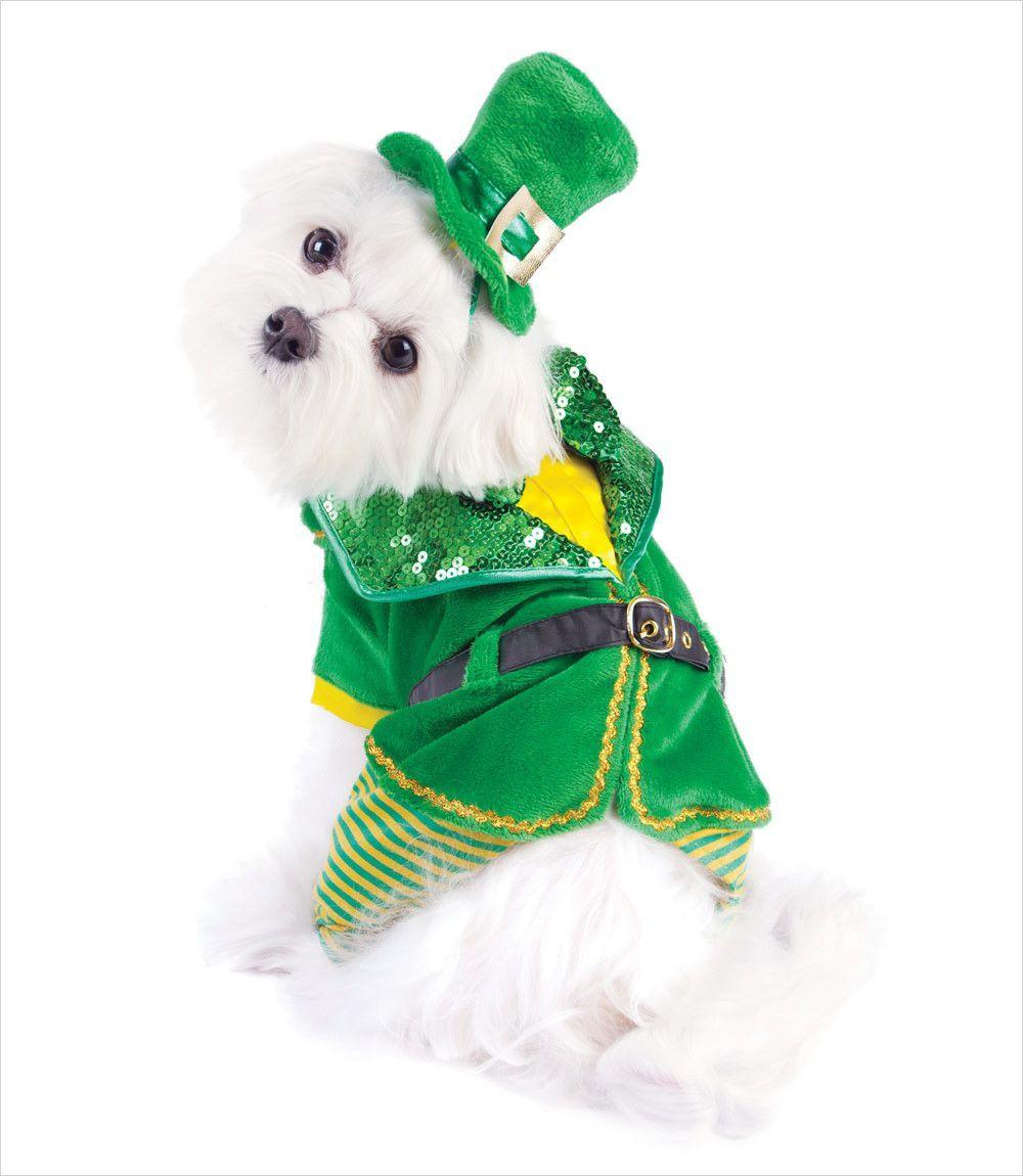 Leprechaun Boy Dog Costume Boy Dog Dog Costume Small Dog Costumes