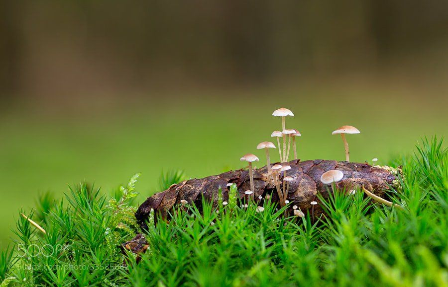 Photograph Pine cone with Mushrooms.. by Lucy Filippini on 500px