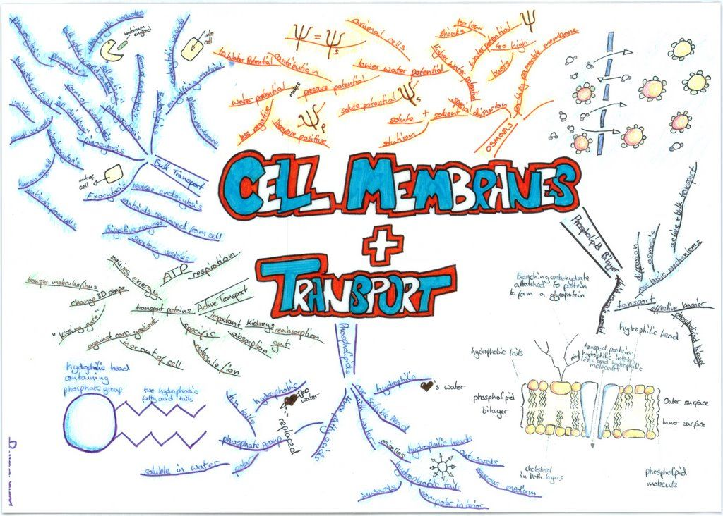 biology notes nice quiz Need homework and test-taking help in biology these articles can help you understand biology for your next quiz, test or class.