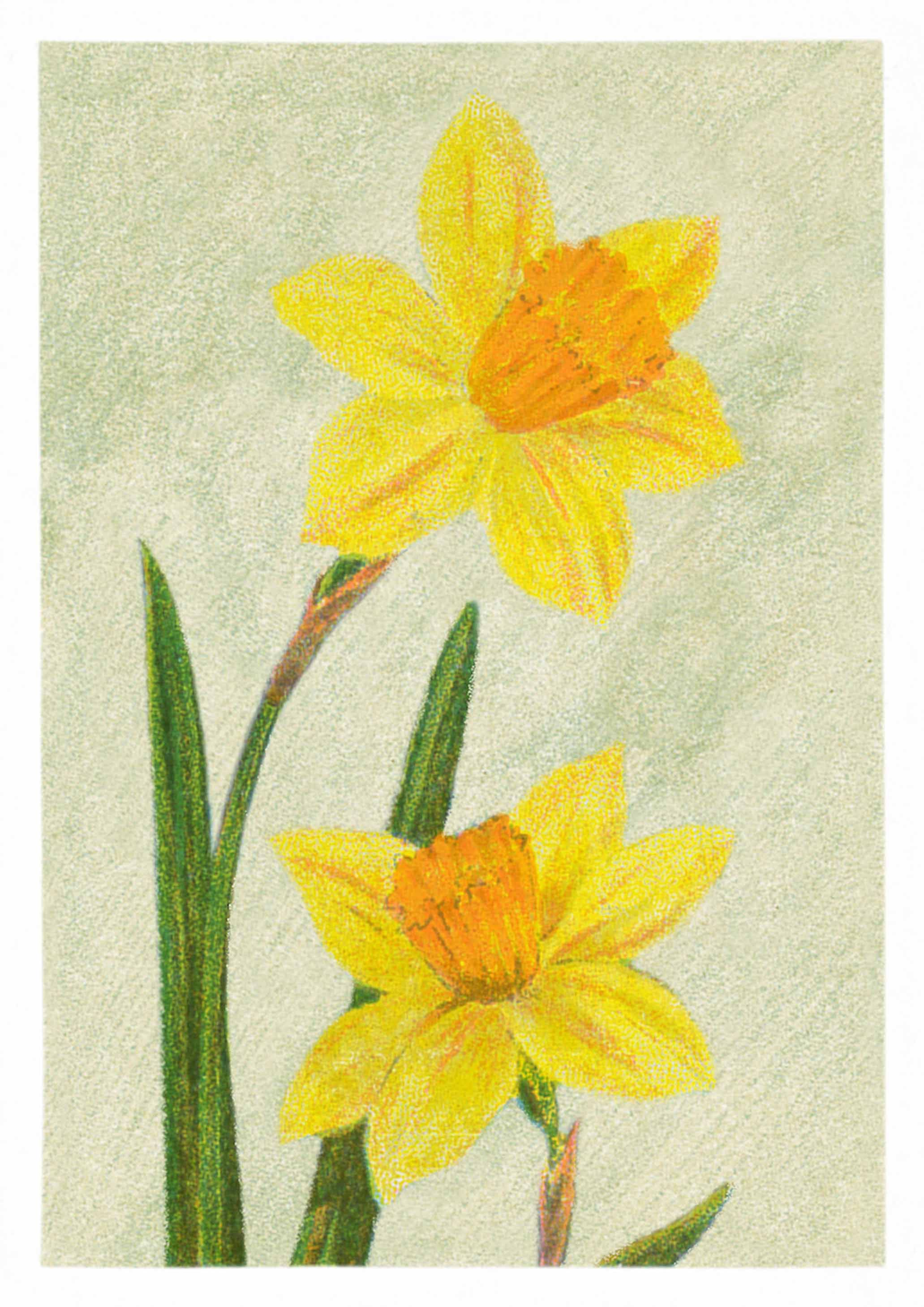 Yellow Daffodils Lovely Vintage Flower Drawing Printed On Canvas