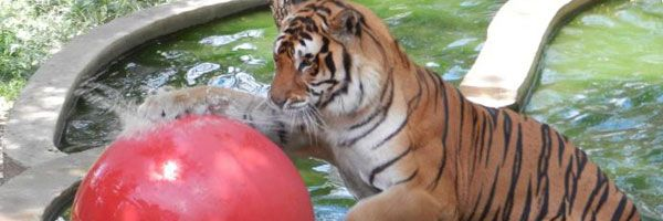 This summer, head to a zoo or aquarium near you for a day ...