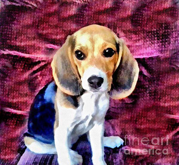 Baby Beagle Puppy By Scott B Bennett Baby Beagle Beagle Puppy