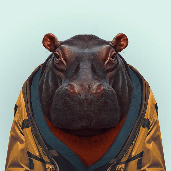 funny hippo picture