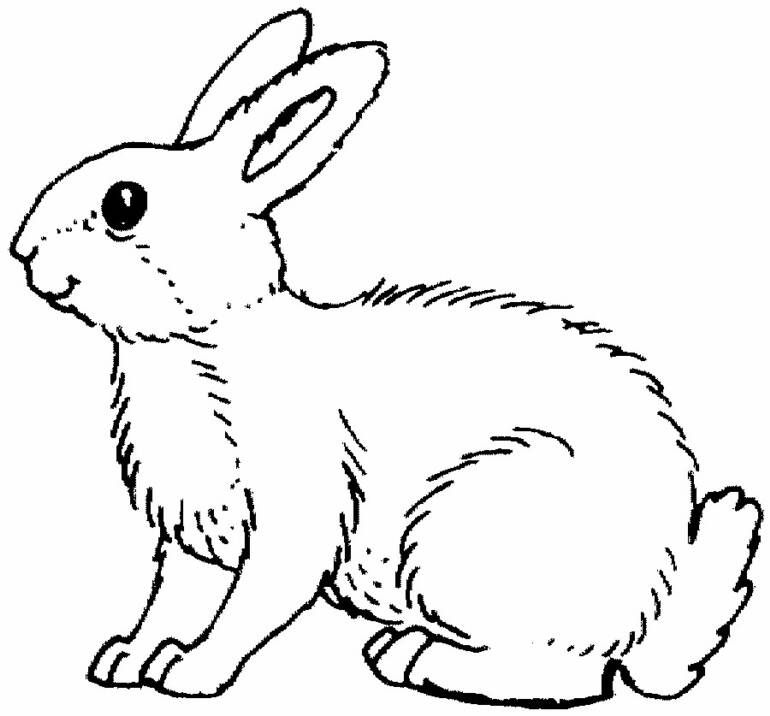 animals coloring pages on (With images) Bunny coloring