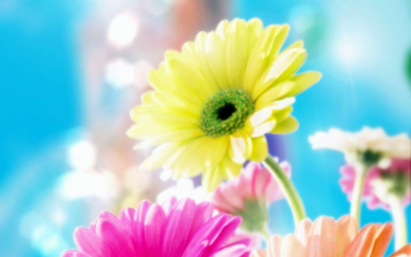 Beautiful Flowers Download Best Hd Wallpapers Most Beautiful Flower Wallpaper In 2020 Beautiful Flowers Wallpapers Flower Wallpaper Most Beautiful Wallpaper