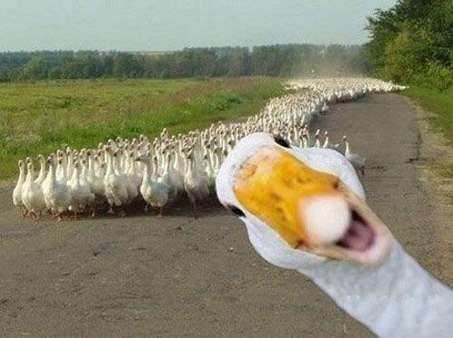 quackaaa