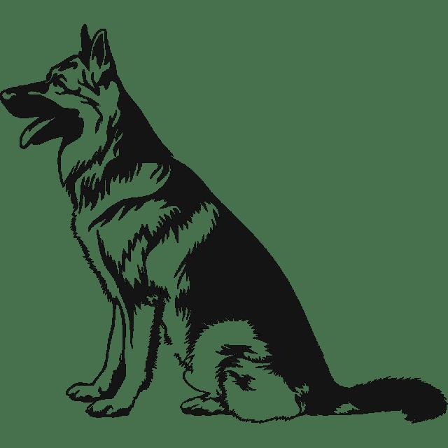 Pin Em German Shepherd Png Images