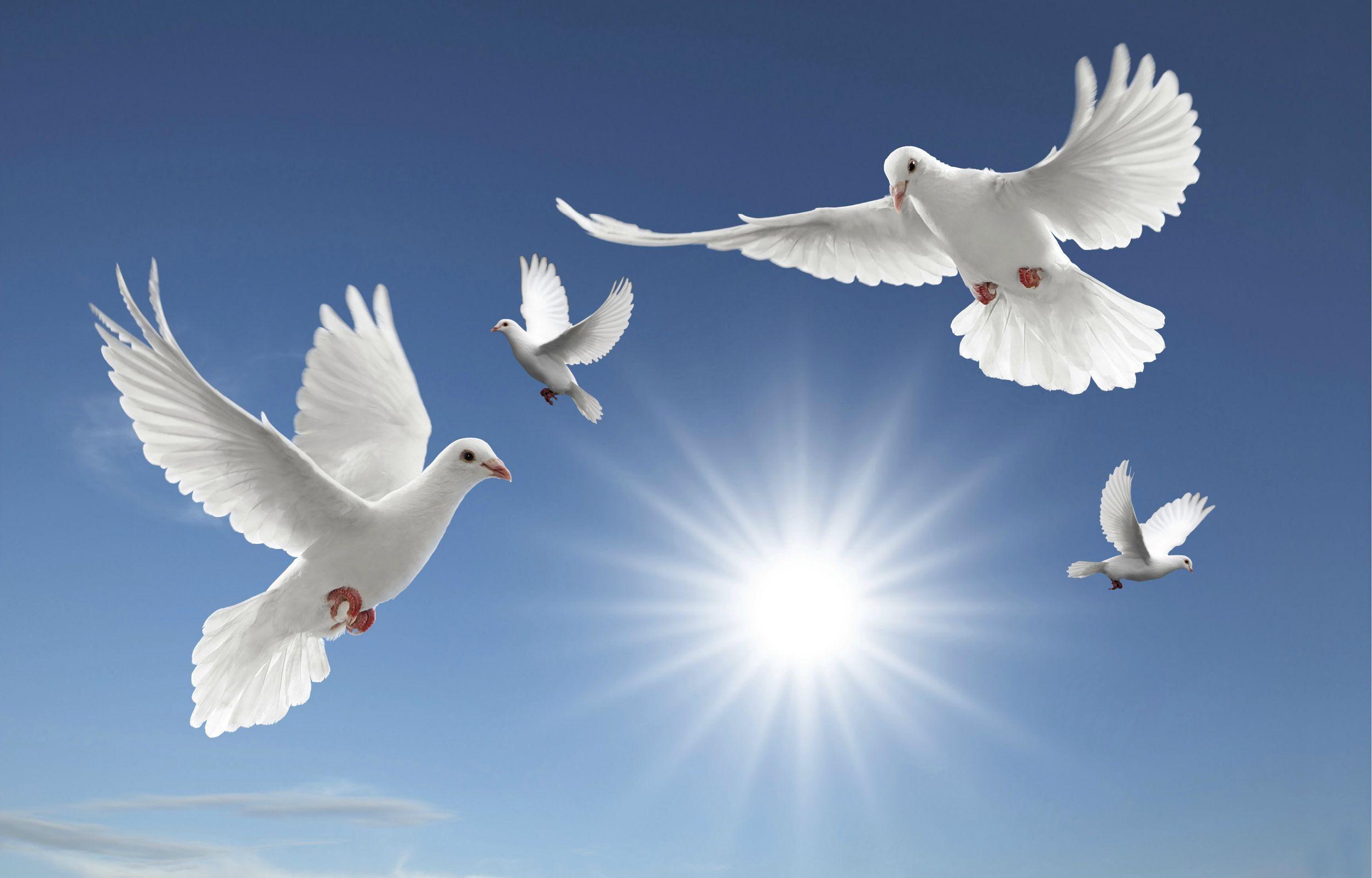 Doves Desktop Background 336977 Jpg 2507 1605 Bird Wallpaper White Doves Holy Spirit Dove