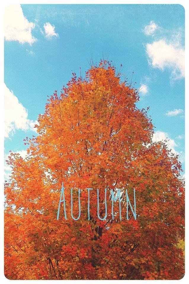 Autumn iPhone wallpaper Neighborhood Finds Pinterest