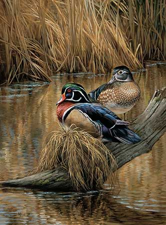 Backwaters Wood Ducks By Rosemary Millette | Wild Wings Part 50
